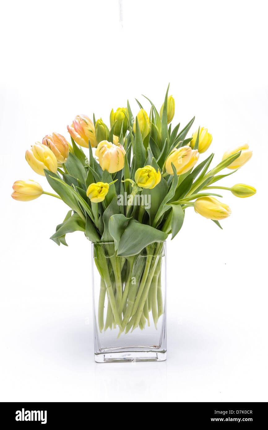 Fresh tulip flower arrangement in a clear glass vase. Stock Photo
