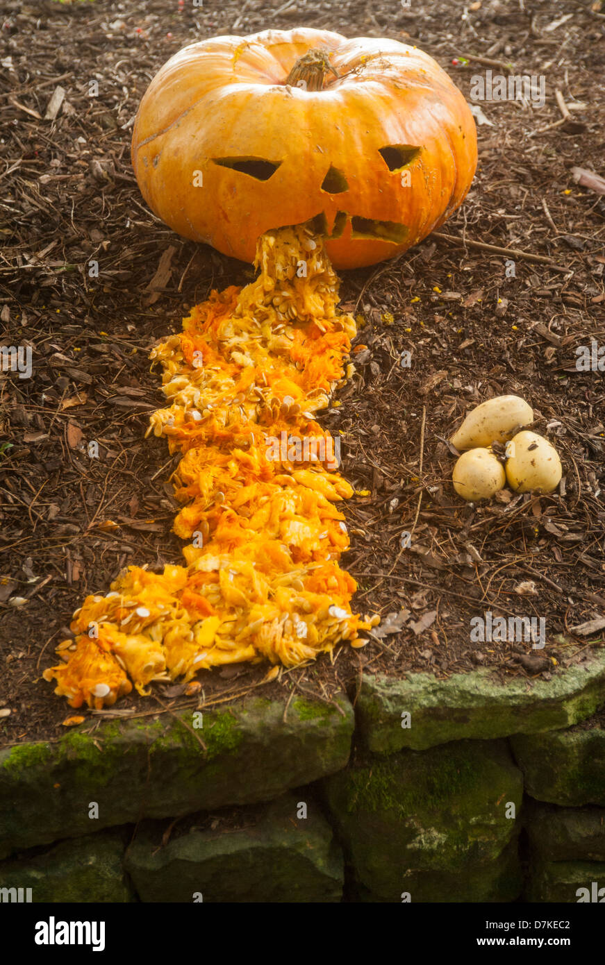 Sickly Pumpkin -  Just the thought to get you in that Halloween spirit and should make the kids smile! - Stock Image