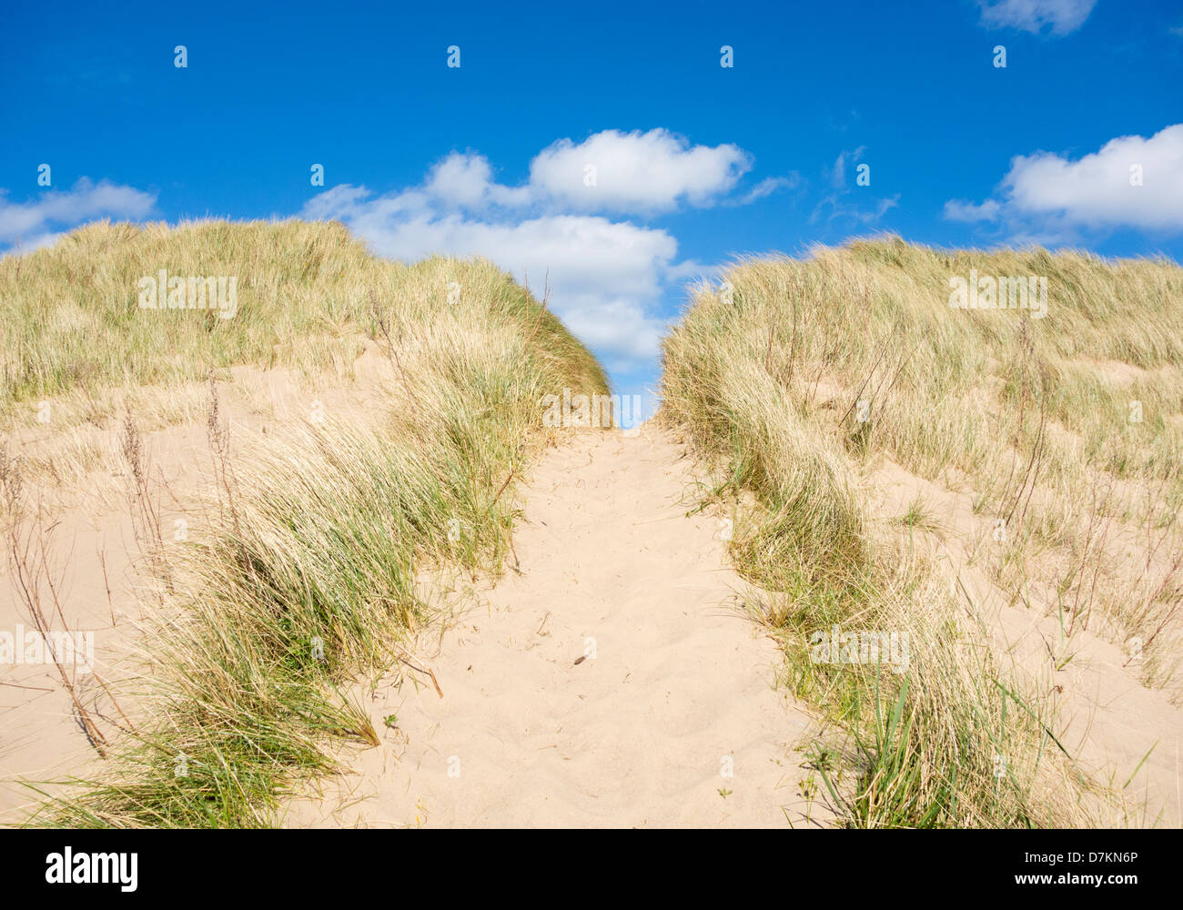 Footpath through dunes leading to beach at Teesmouth Natural Nature Reserve near Seaton Carew, Hartlepool, England, - Stock Image