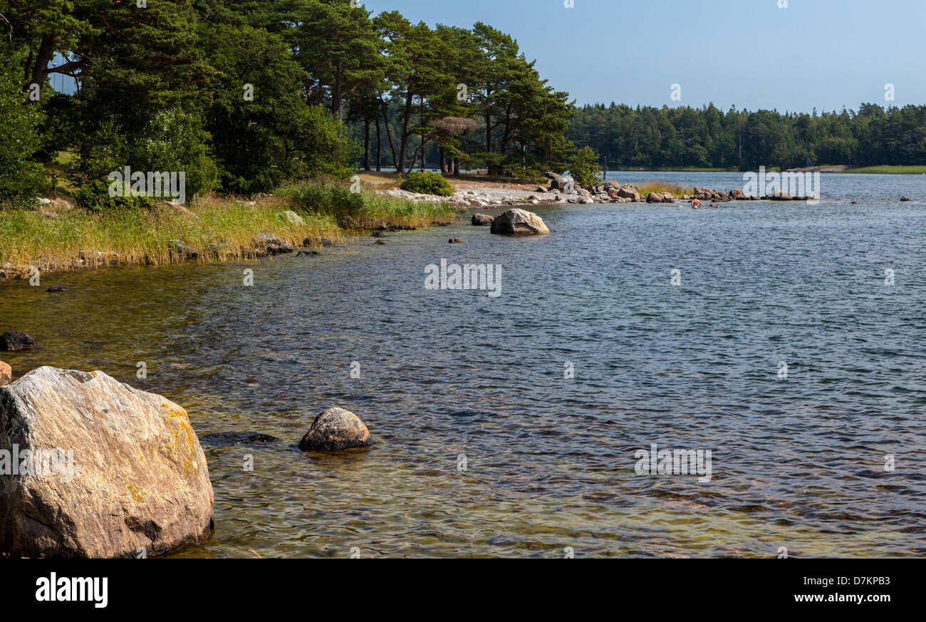 Pine trees on a rugged shoreline on Nynashamn, a small village in the southern Stockholm Sweden archipelago. - Stock Image
