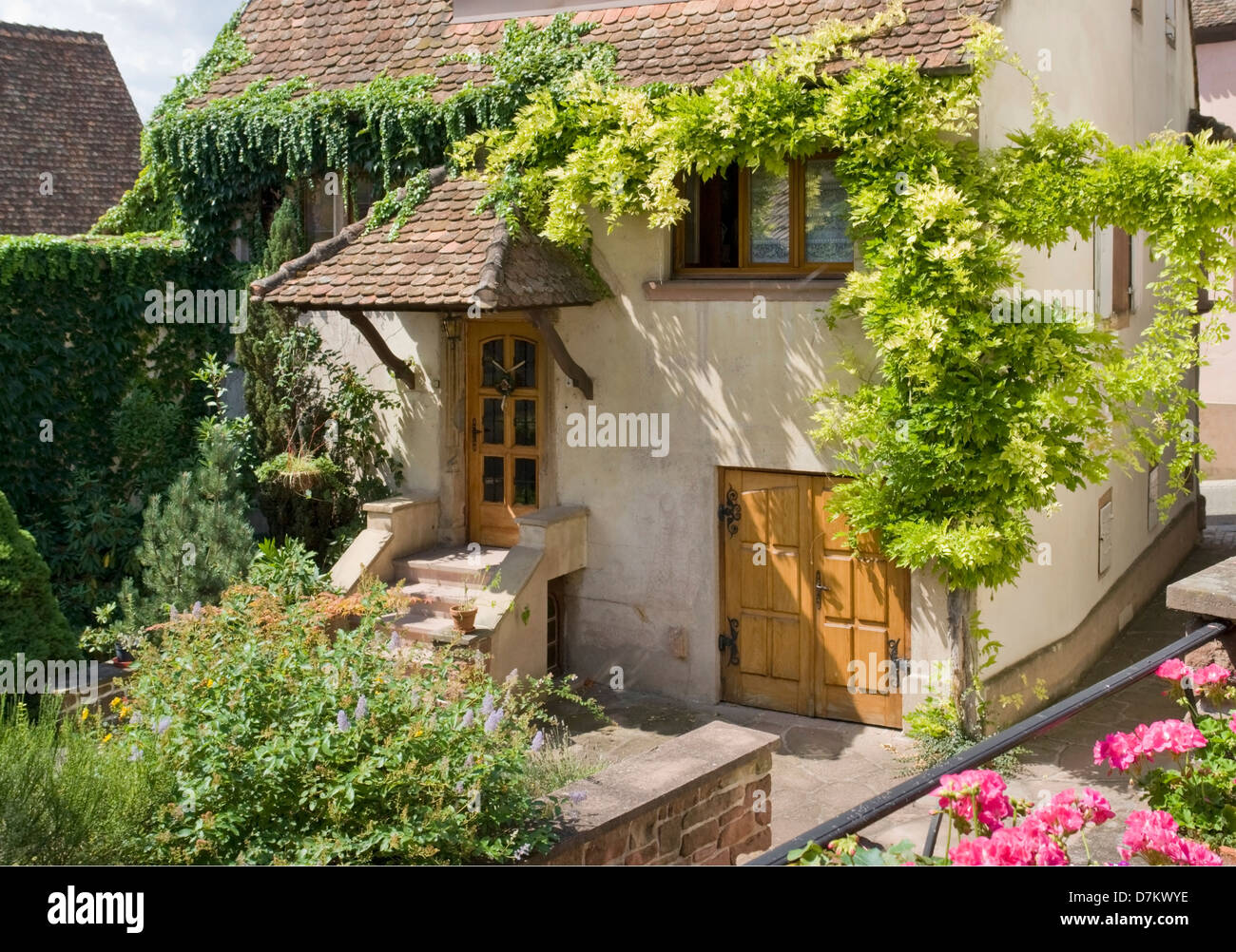 idyllic overgrown house detail in Mittelbergheim, a village of a region in France named Alsace - Stock Image