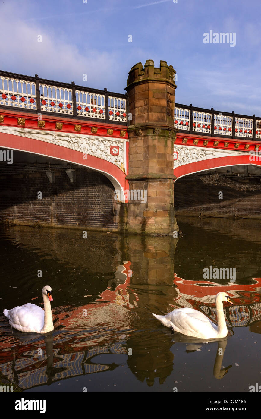 Swans on River Soar by Victorian West Bridge, Leicester, England, UK - Stock Image