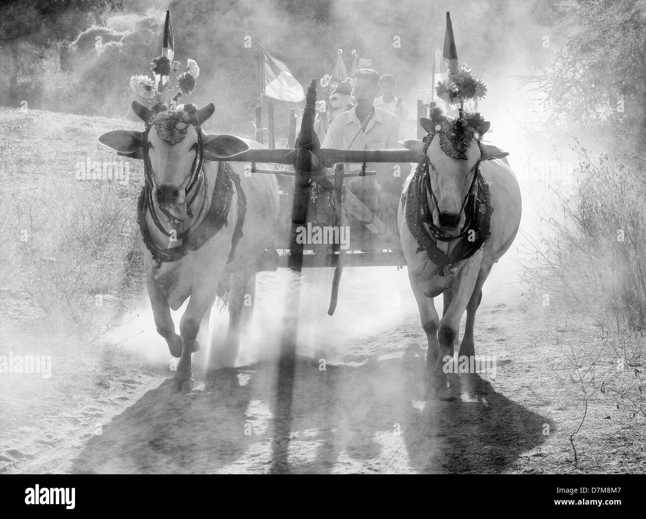 Oxen cart in the dust, Bagan, Burma (Myanmar) - Stock Image