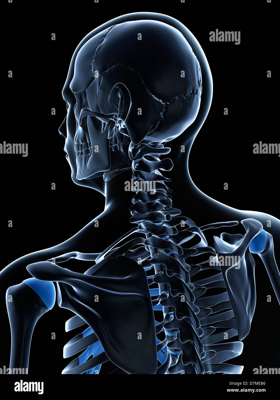 Illustration Male Shoulder Neck Anatomy Stock Photos & Illustration ...