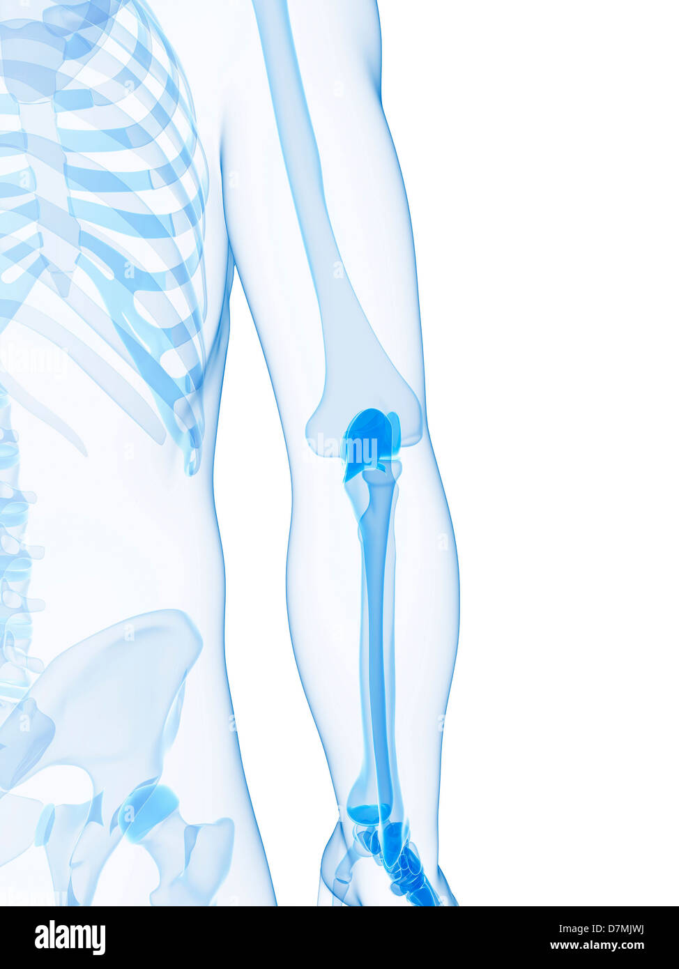 Hip Joint Anatomy Stock Photos Hip Joint Anatomy Stock Images Alamy