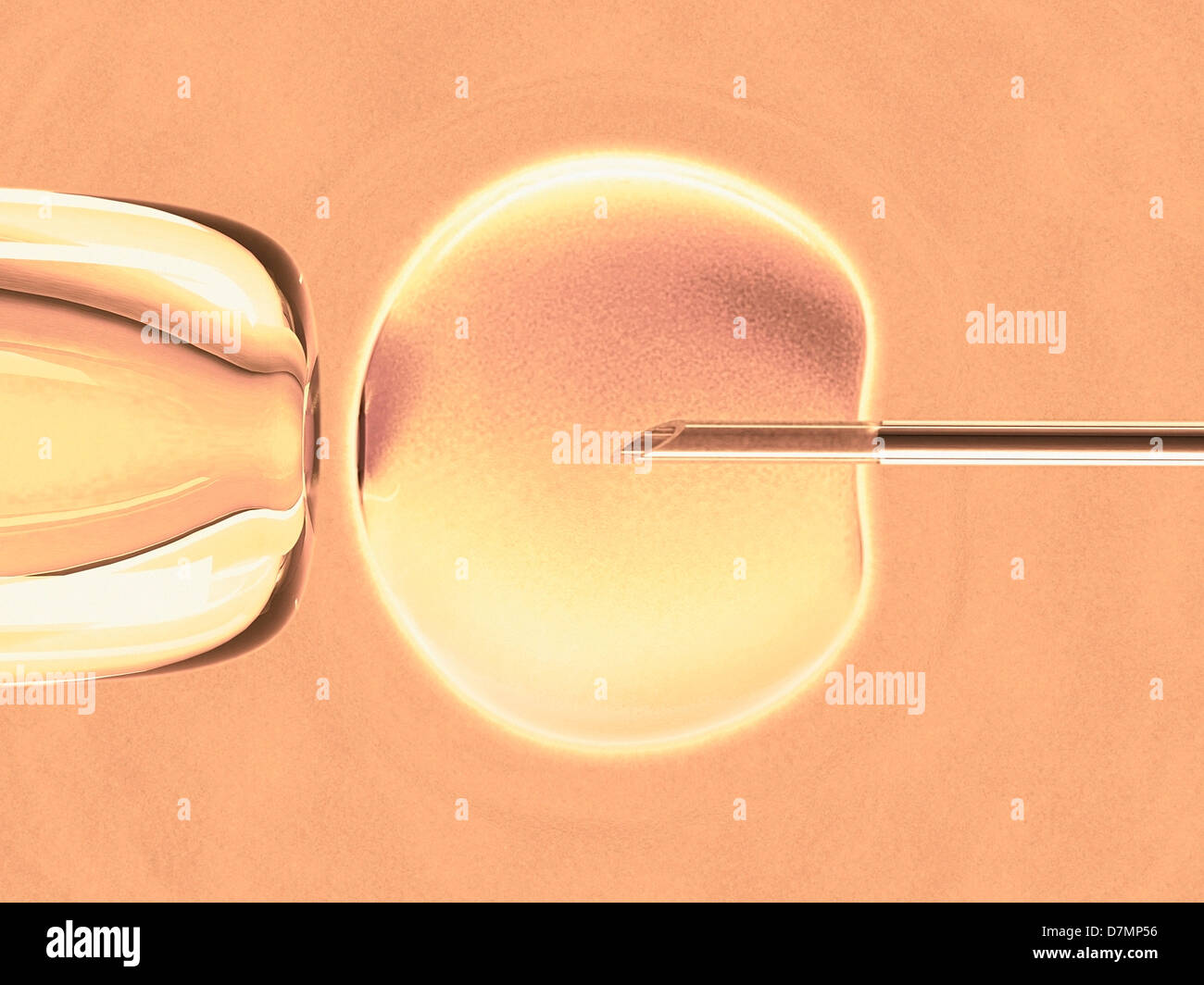 In vitro fertilisation, artwork - Stock Image