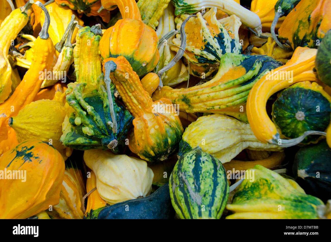 California fruit stand Autumn harvest. Ornamental 'Winged' gourds. - Stock Image