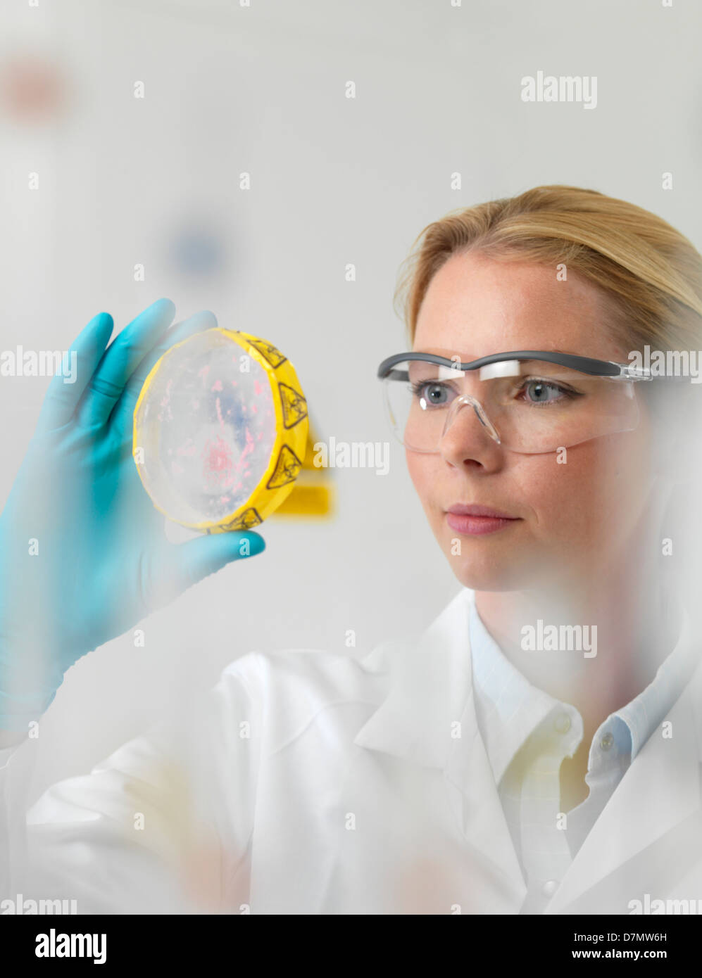 Microbiology research - Stock Image