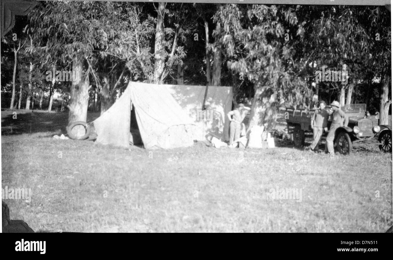 Tent and camp in eucalyptus grove - Stock Image