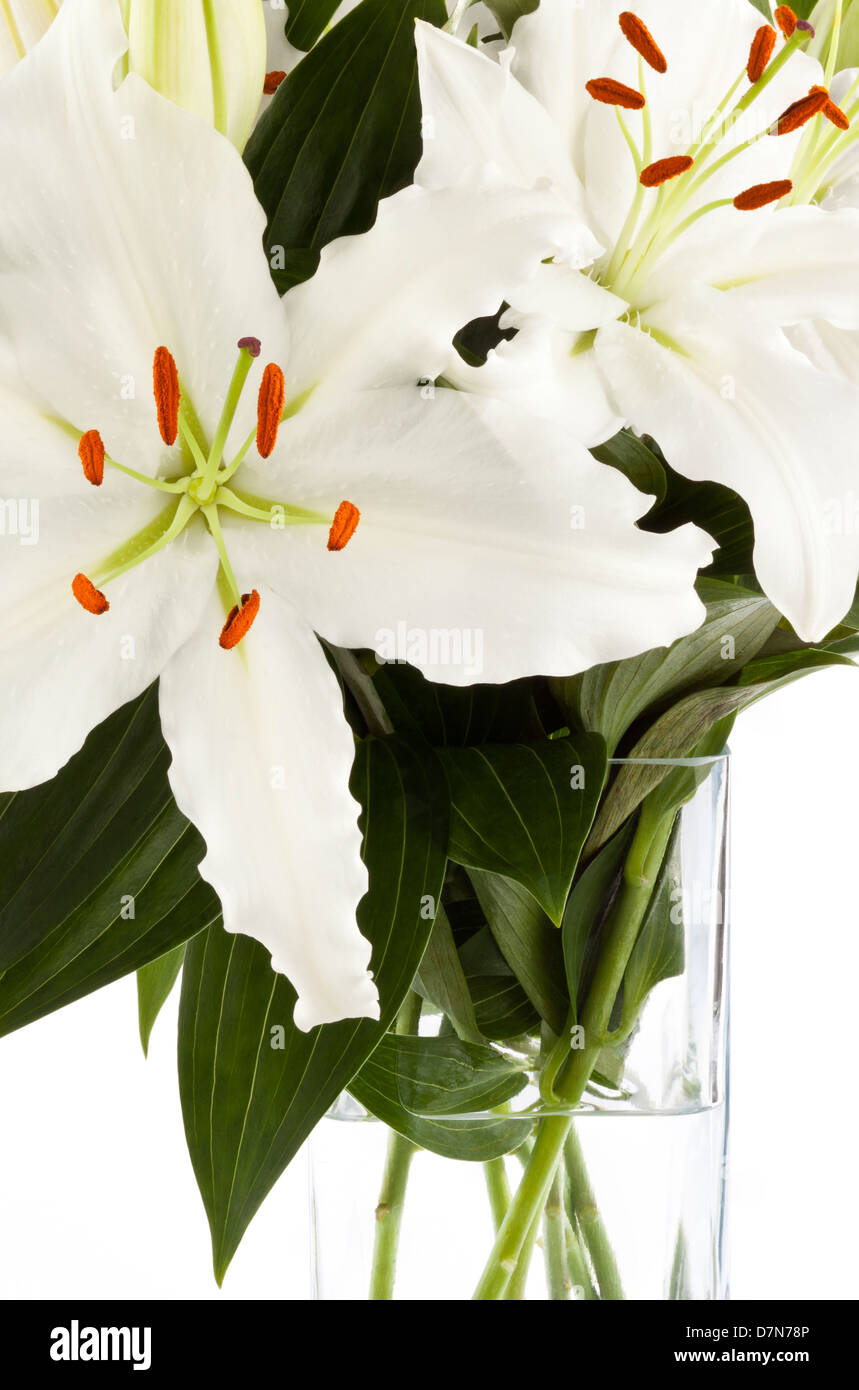 A vase of white lilies on a white background - Stock Image