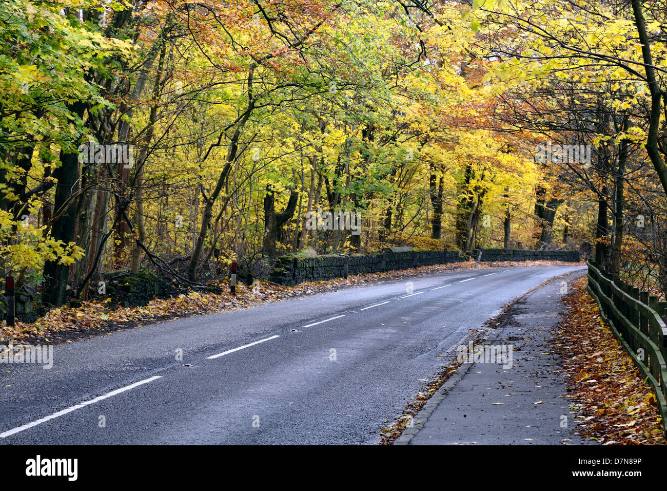 An empty country road in Autumn, Scotland, UK - Stock Image