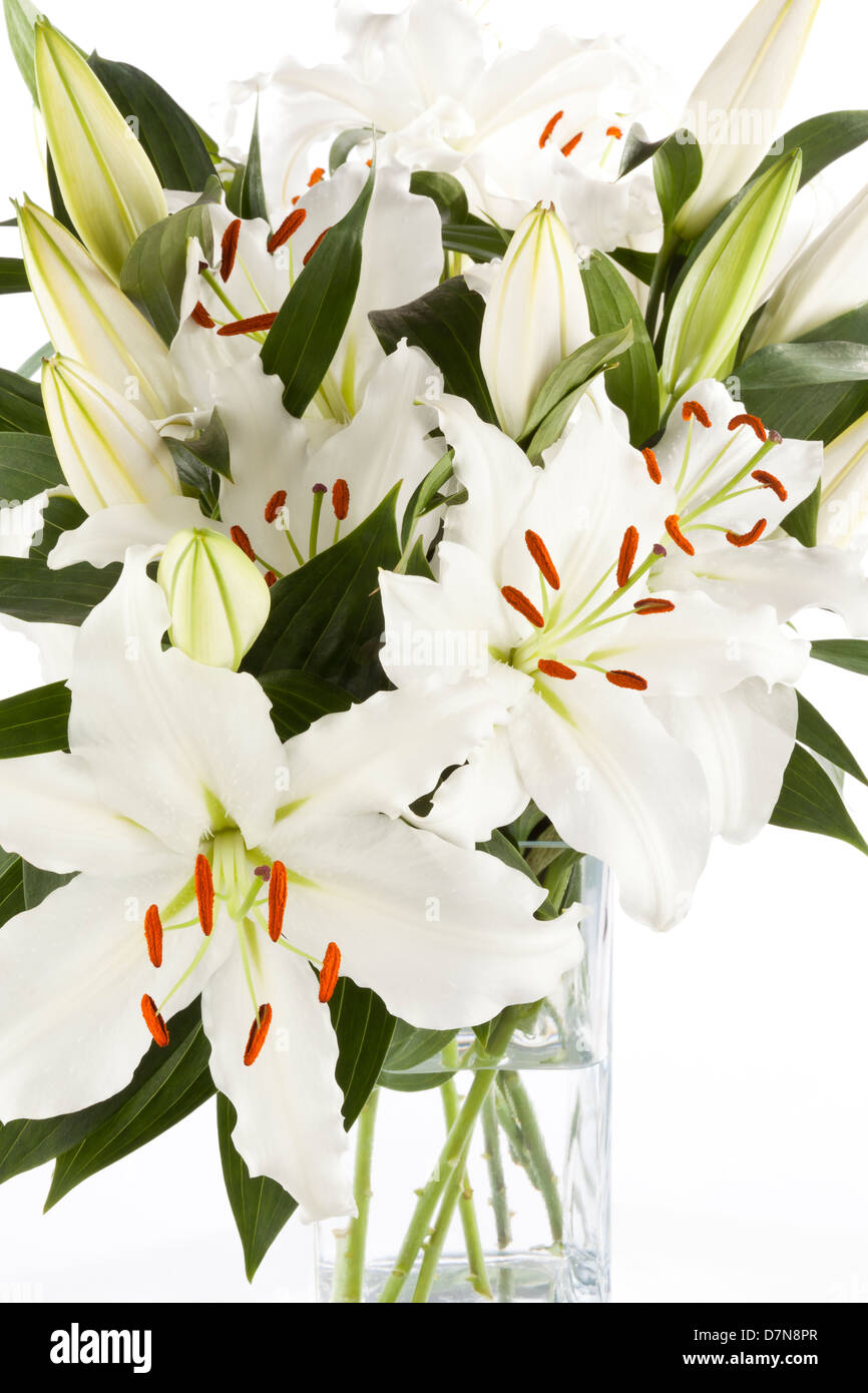 White Lily flowers in a vase on a white background Stock Photo