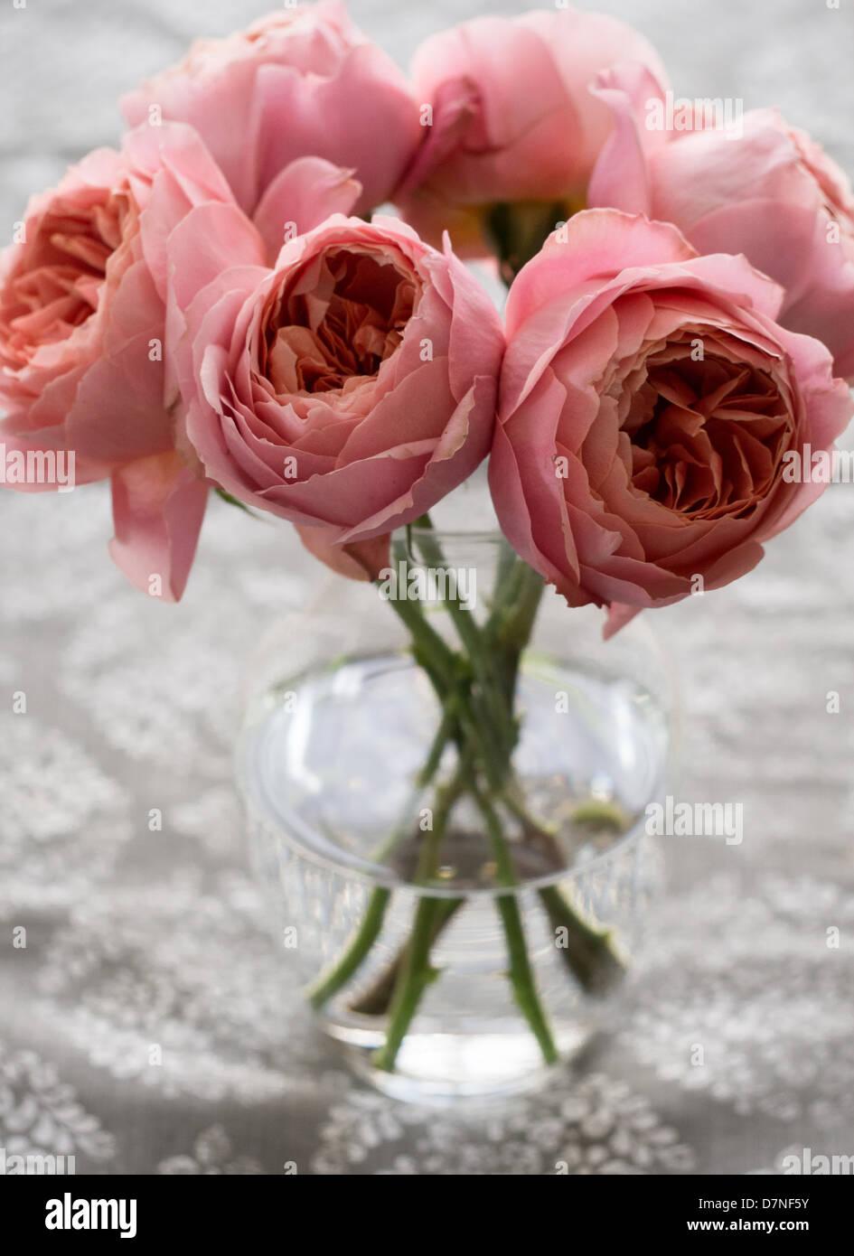 Pink peonies in a vase - Stock Image