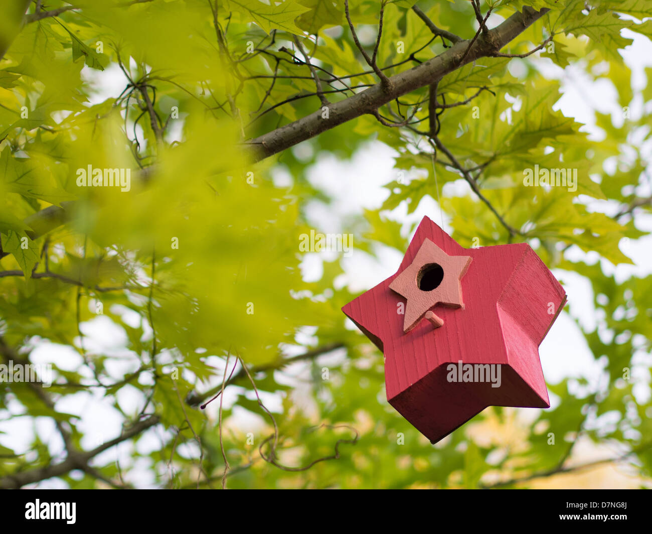 Colorful, wooden painted bird house hanging in a tree Stock Photo ...