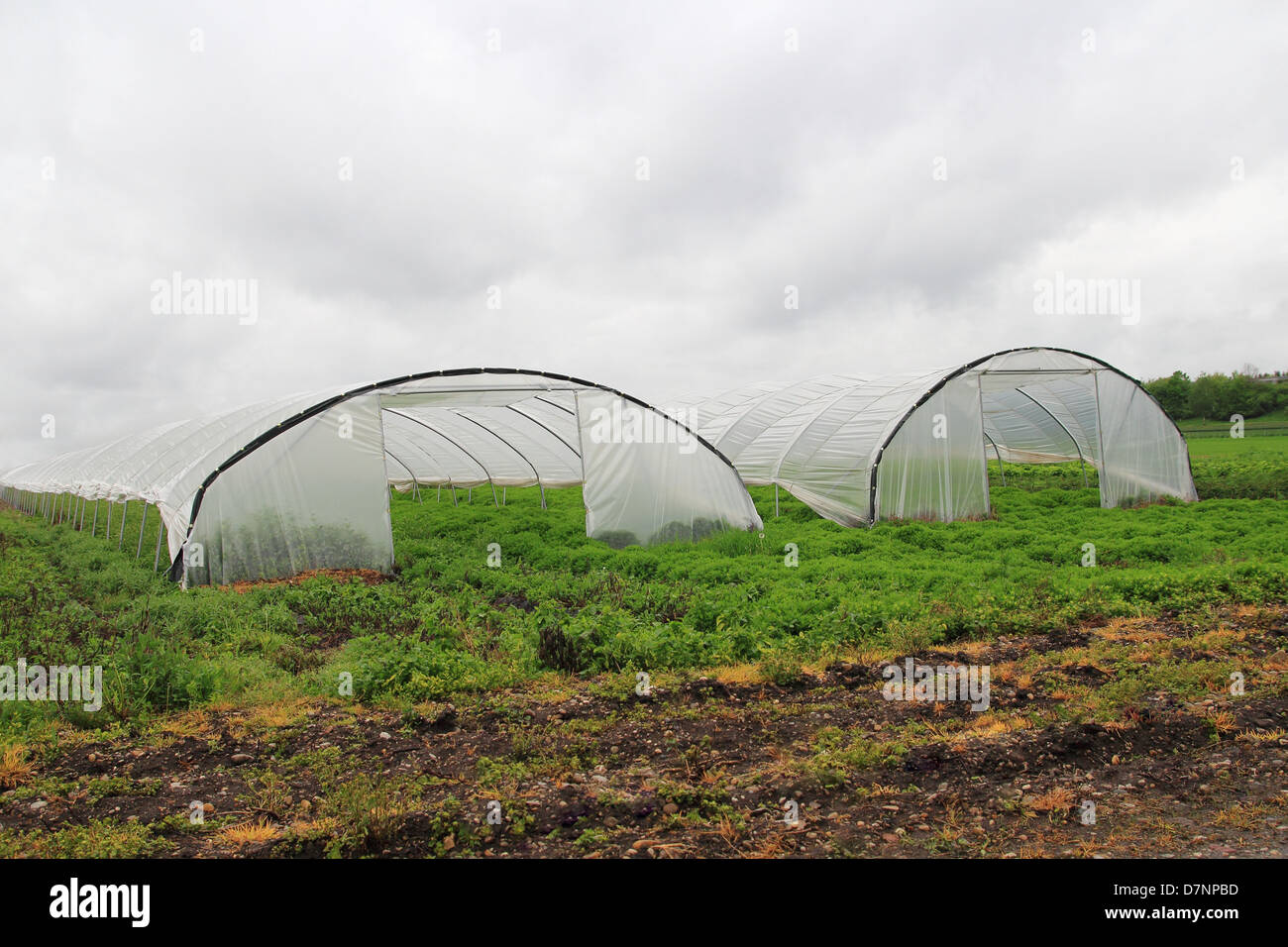 Two Greenhouses - Stock Image