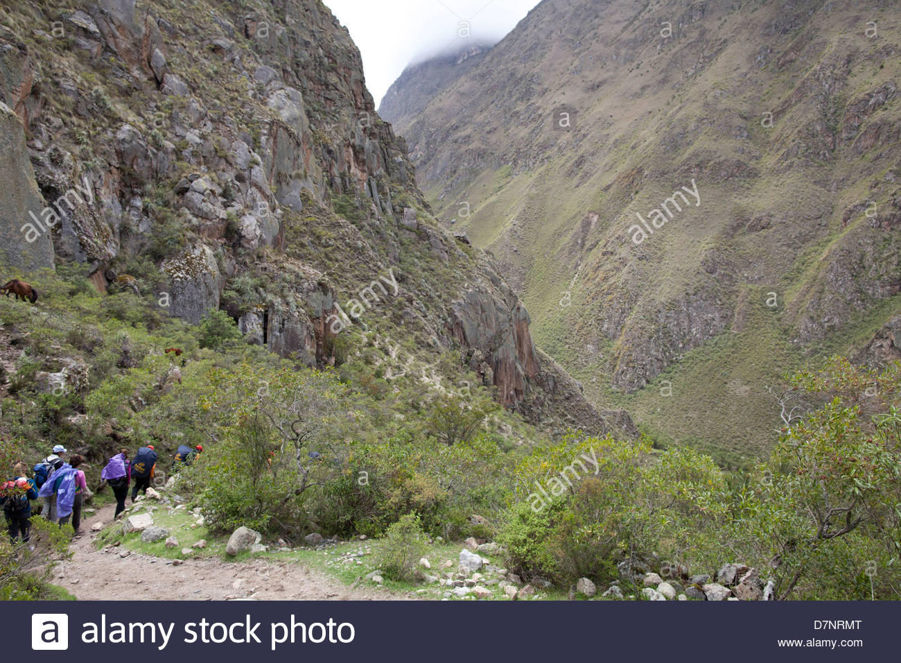 Trekkers walking the Inca Trail at low altitude - Stock Image