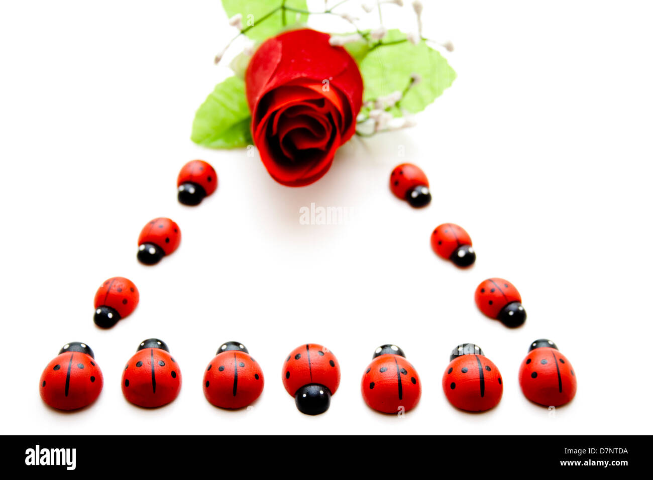 Wooden beetle with rose - Stock Image