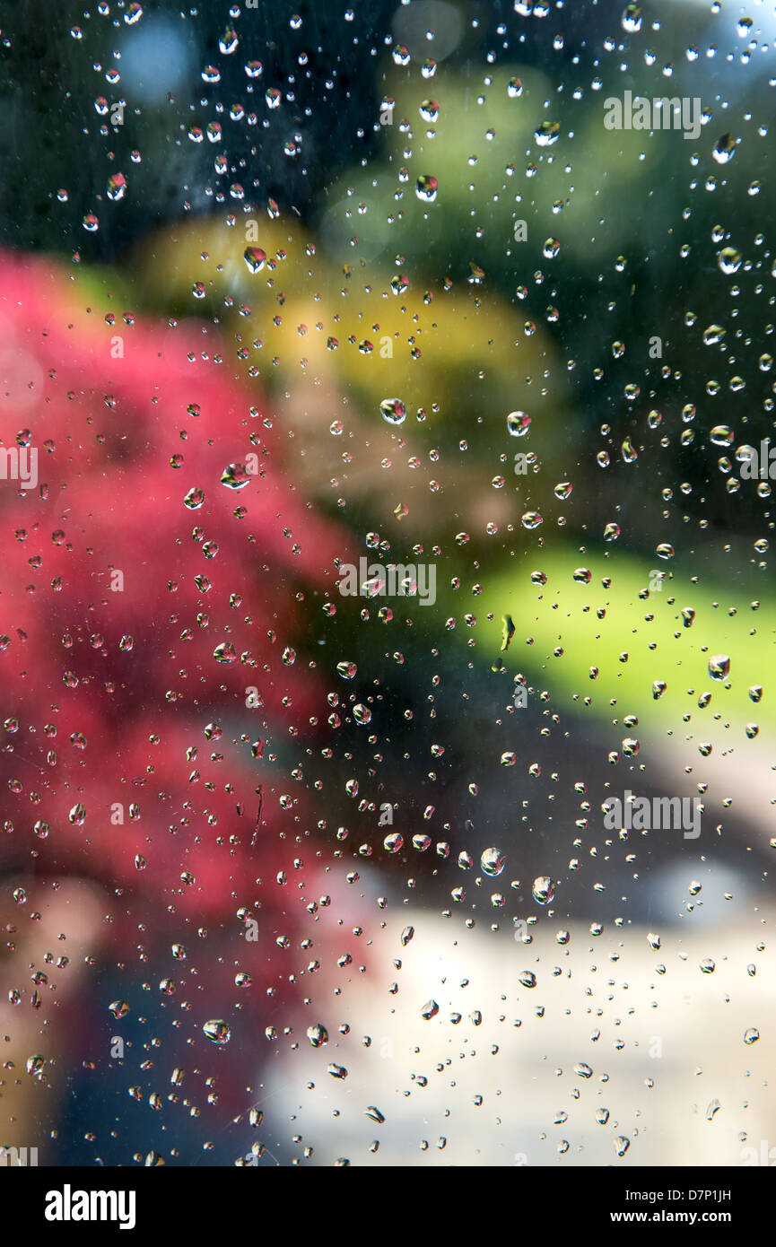 Sunlit garden through a raindrop covered window - Stock Image