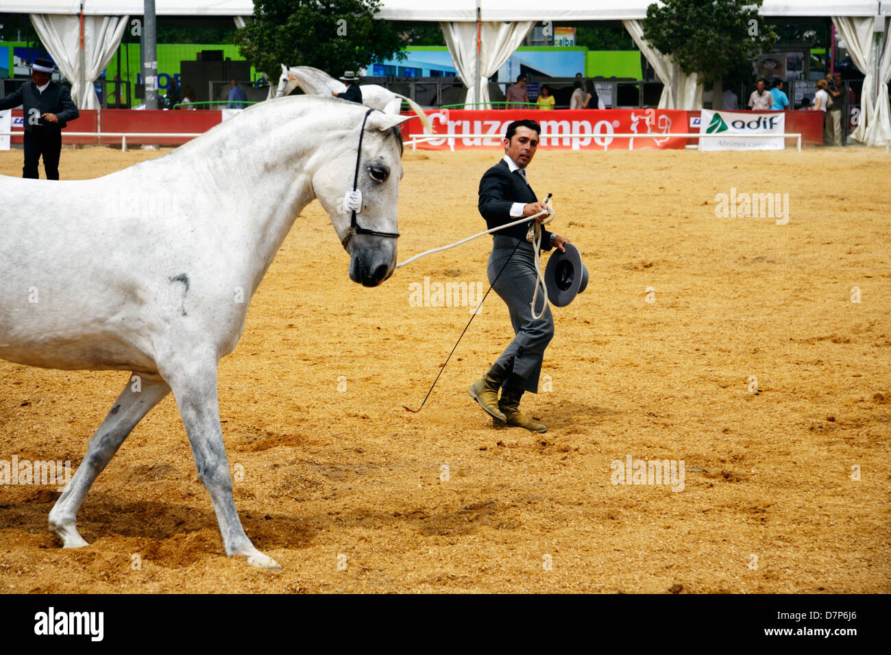 Andalusian horseman exhibiting his thoroughbred mare at Cordoba Horse Fair. Spain - Stock Image