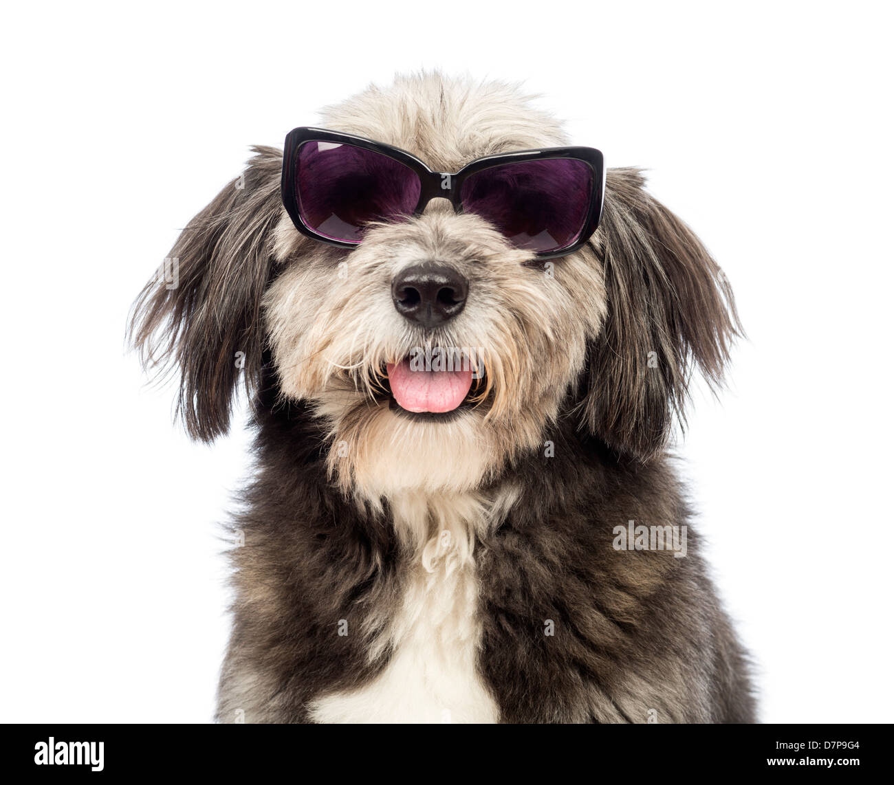 Close-up of a Crossbreed dog, 4 years old, wearing sunglasses against white background - Stock Image
