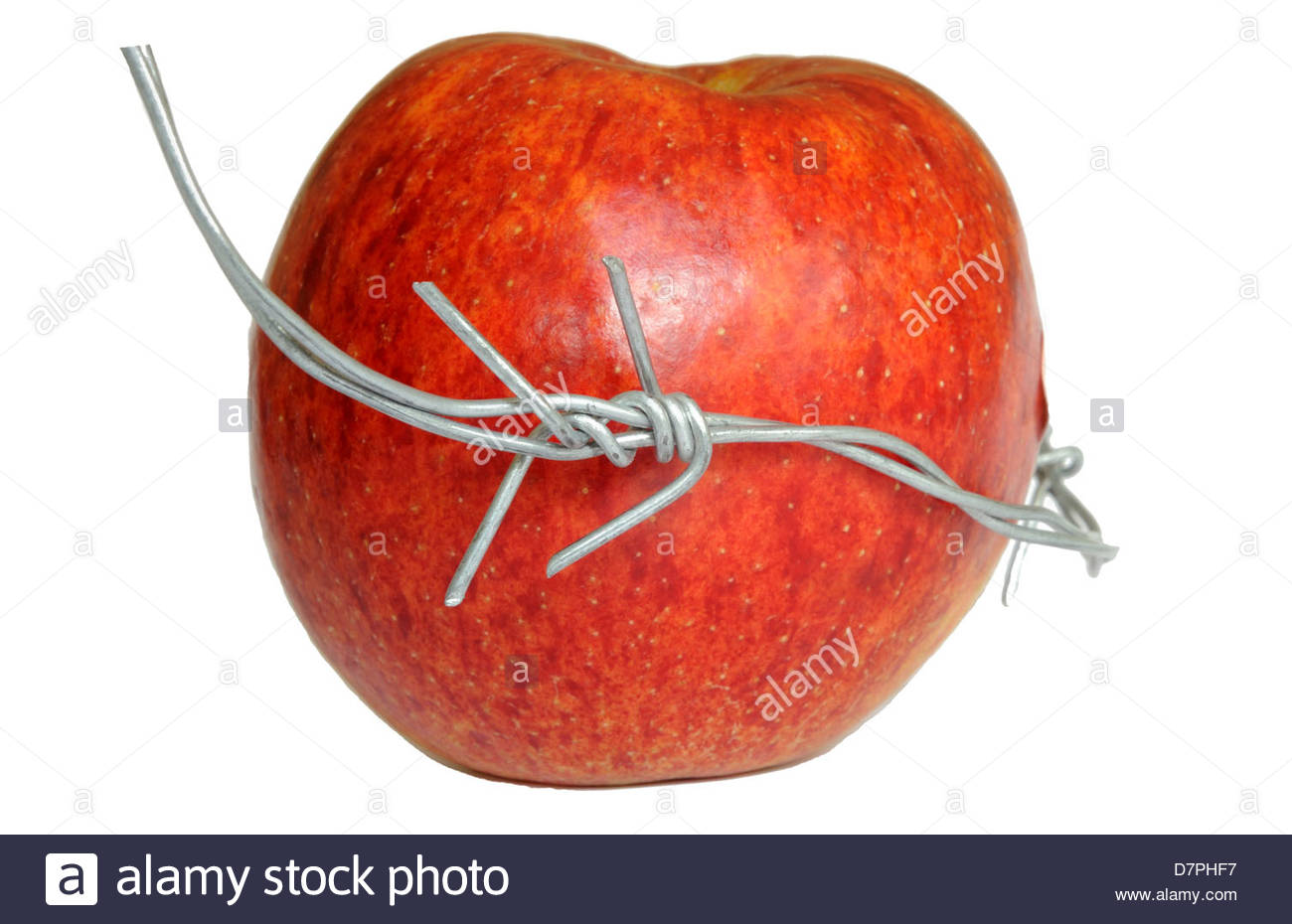 Apple and barbed wire - forbidden fruit, food security , IP on hybrid crops. - Stock Image