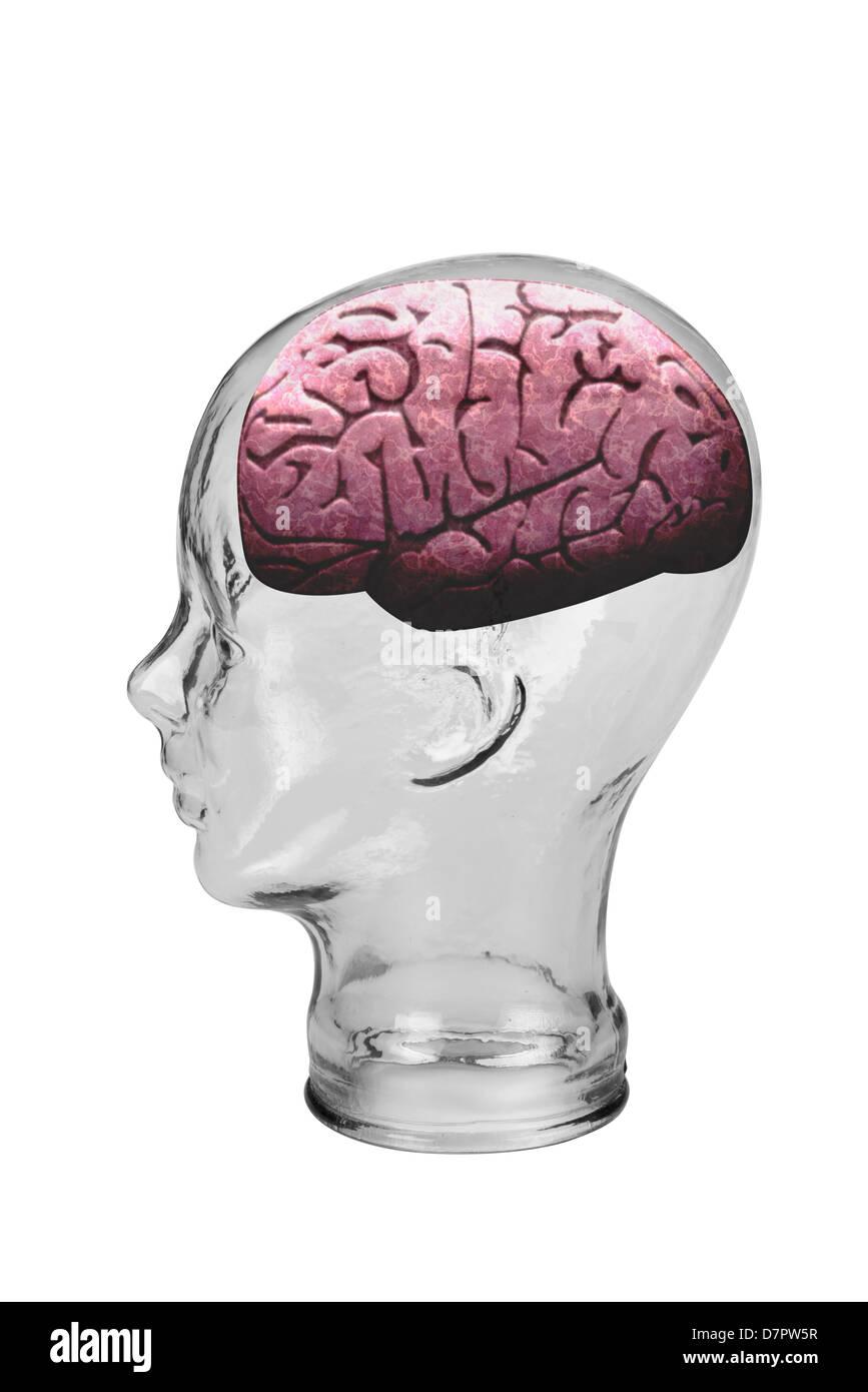 Brain. - Stock Image