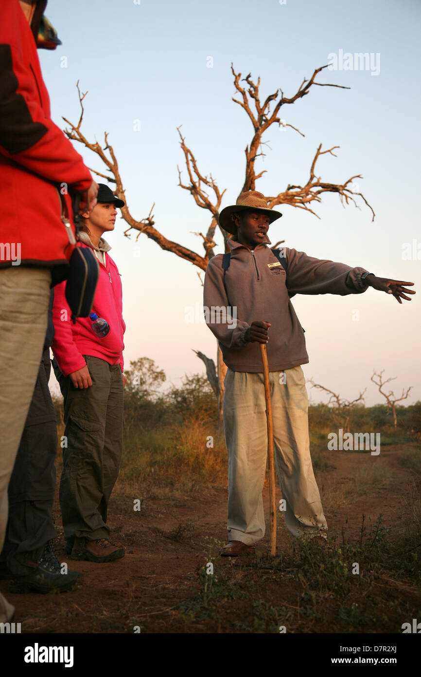 guide talking to group with serengetti tree behind him - Stock Image