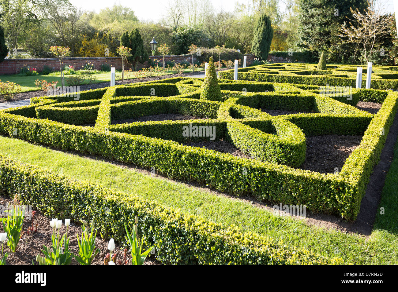Formal box hedging  in ornamental design  in Stratford Warwickshire England - Stock Image