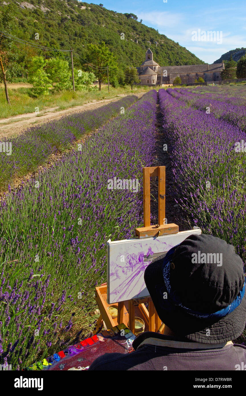 Artist painting at Lavenders fields in Abbaye Notre-dame de Senanque( Senaque Abbey ) , Gordes, Provence, France - Stock Image