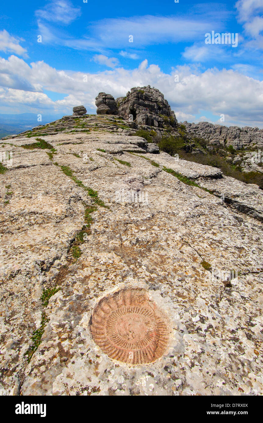 Ammonite fossil at theTorcal in Antequera, Erosion working on Jurassic limestones. Malaga province, Andalusia, Spain - Stock Image
