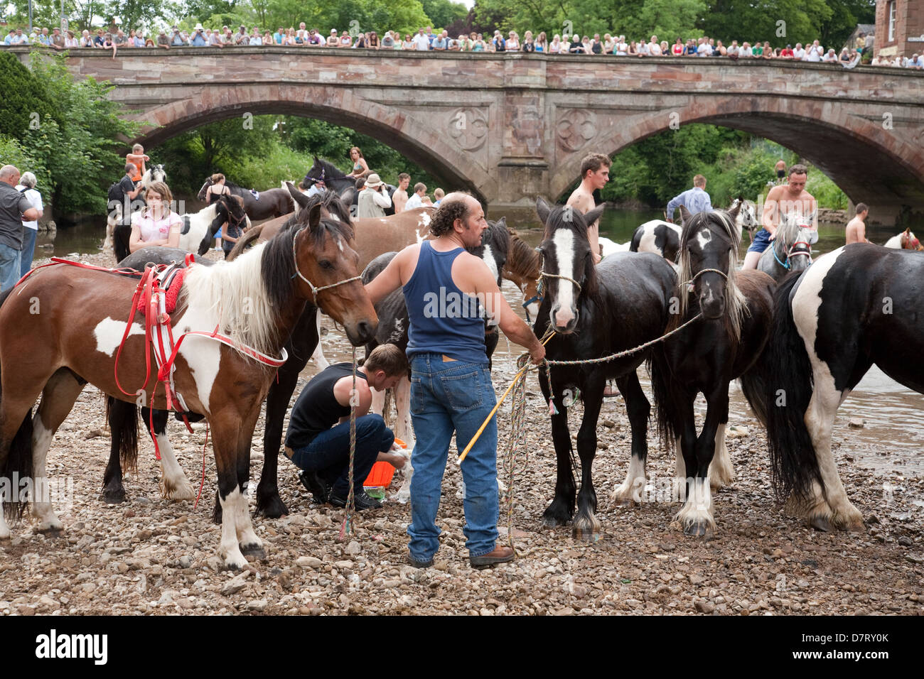 Horses by the river at the Appleby Fair, an annual gathering of Gypsy and Traveller communities in Cumbria, England Stock Photo