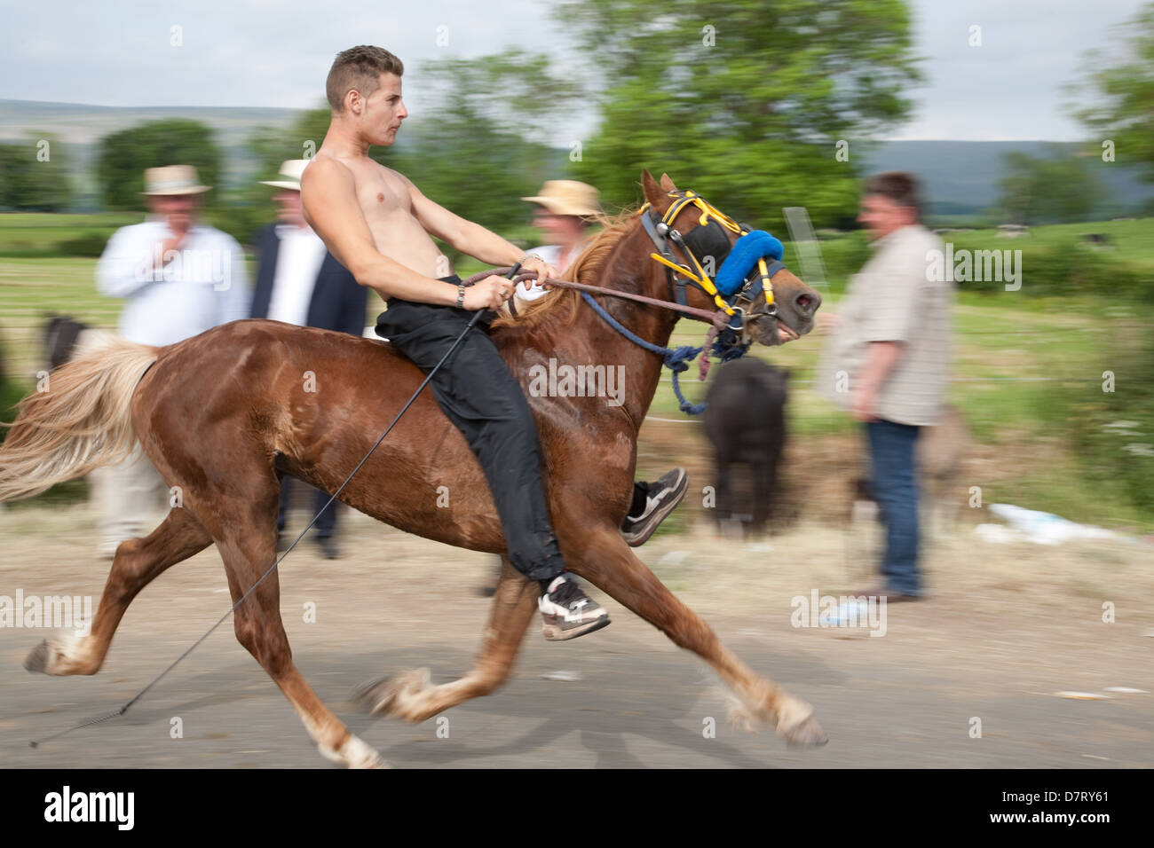 A speeding horse and rider at the Appleby Fair, an annual gathering of Gypsy and Traveller communities in Cumbria. Stock Photo