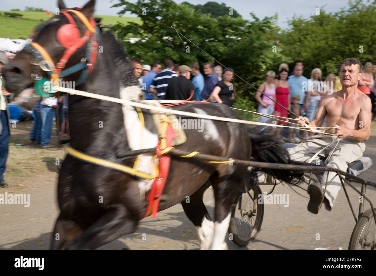 A speeding horse and sulky cart at the Appleby Fair, an annual gathering of Gypsy and Traveller communities in Cumbria. - Stock Image