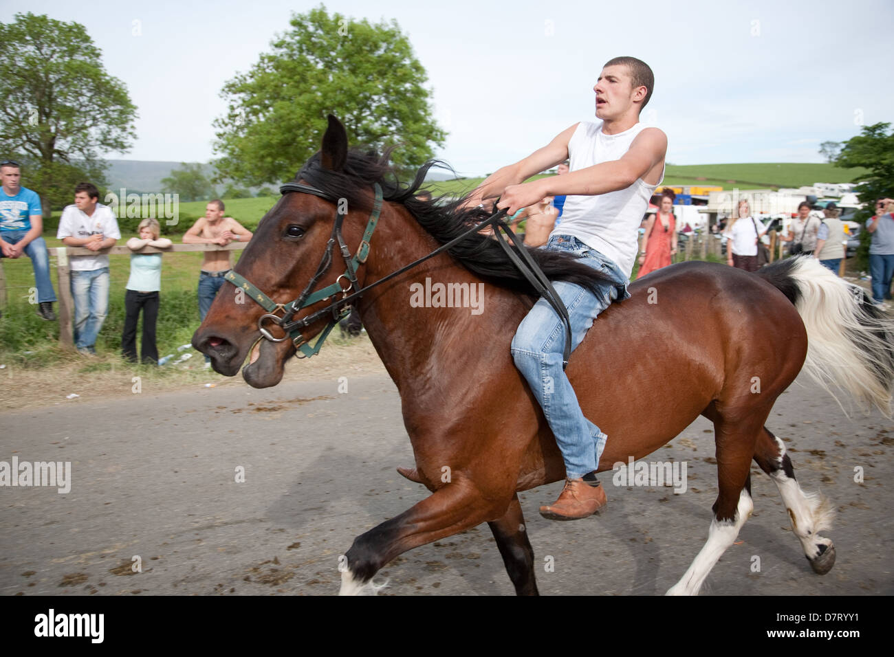 Man man tries out a horse at the Appleby Fair, an annual gathering of Gypsy and Traveller communities in Cumbria, Stock Photo