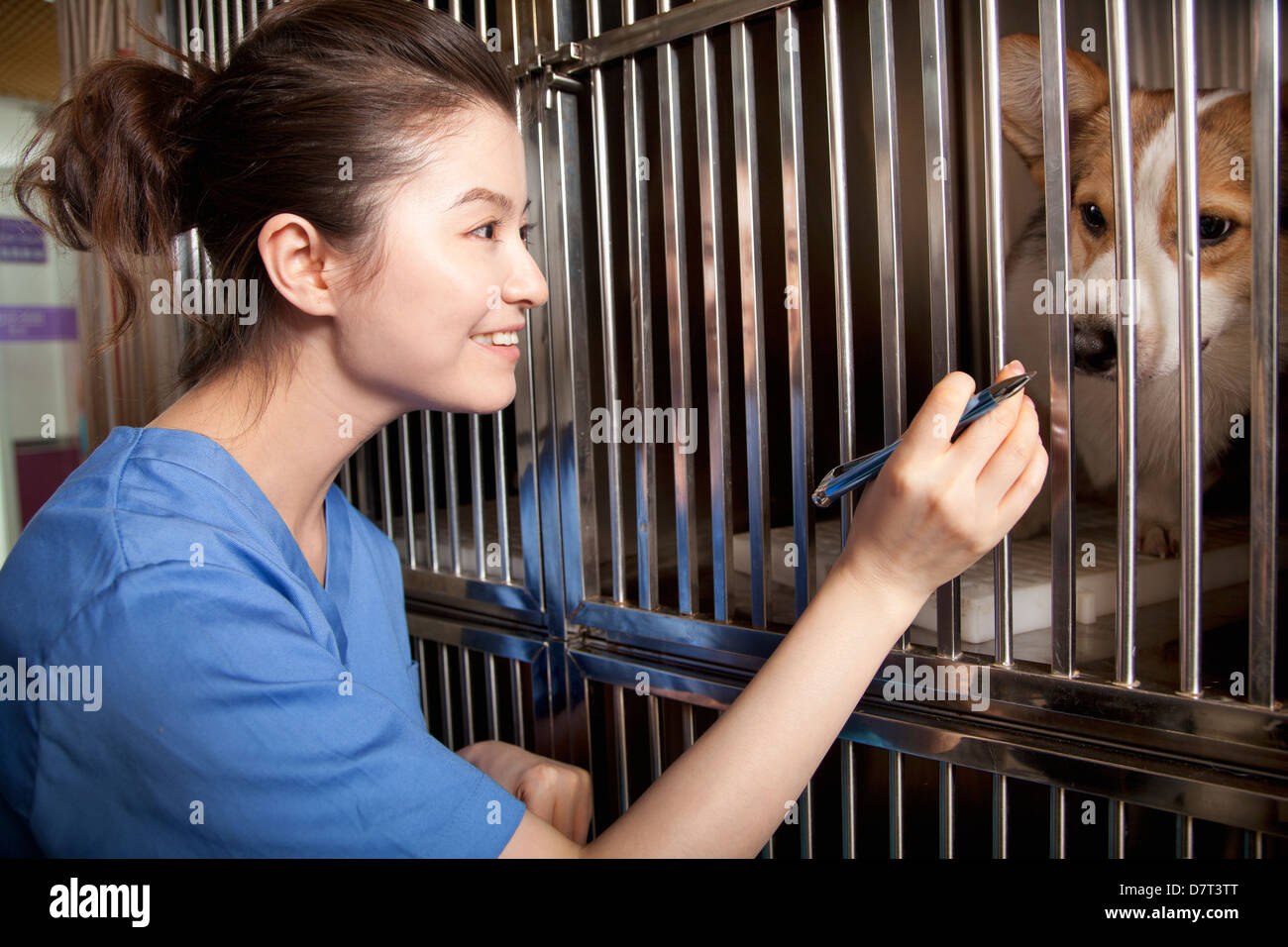 Veterinarian with dog - Stock Image