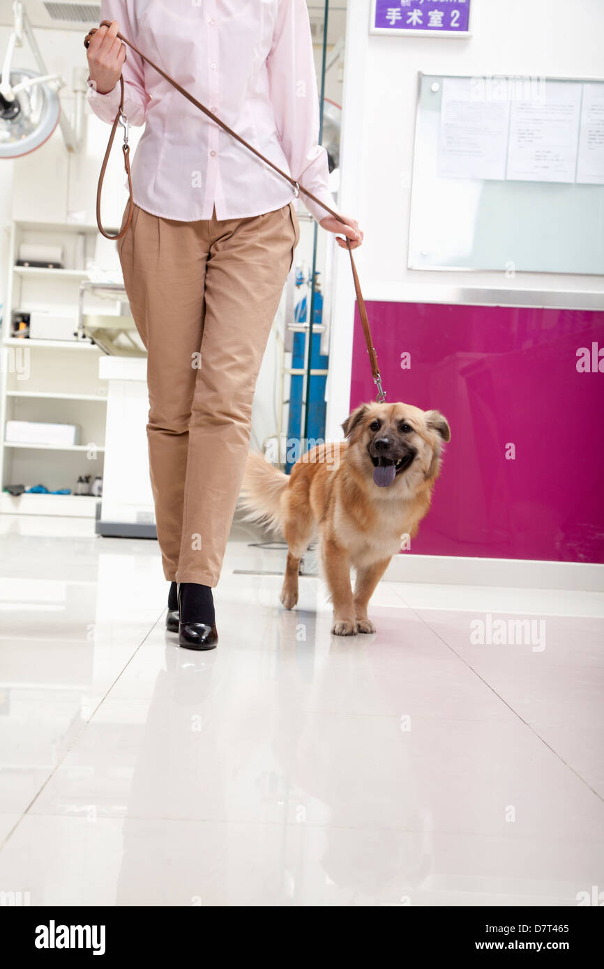 Woman walking with dog in veterinarian's office - Stock Image