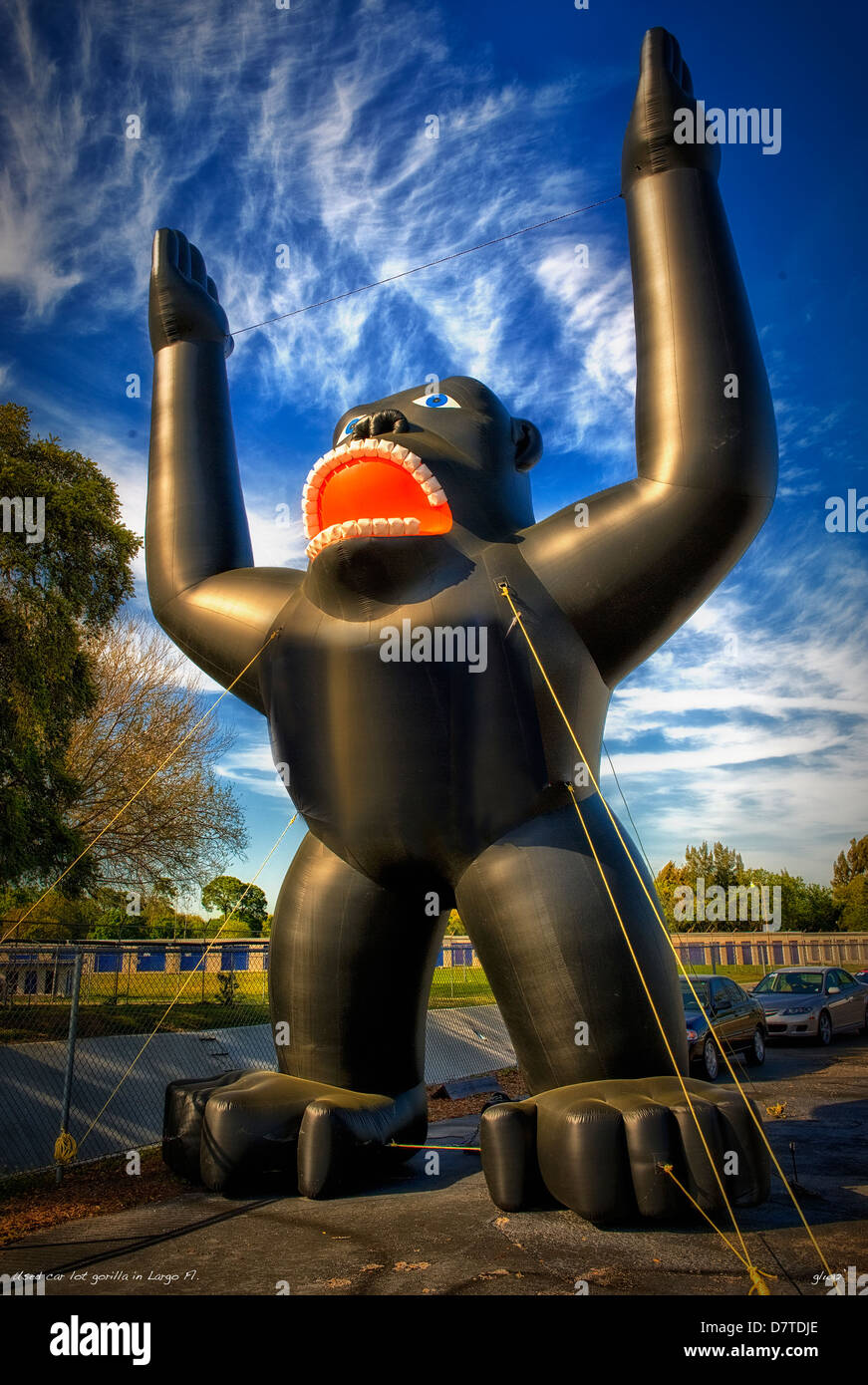 Inflatable gorilla used car lot attraction,St Petersburg,Florida - Stock Image