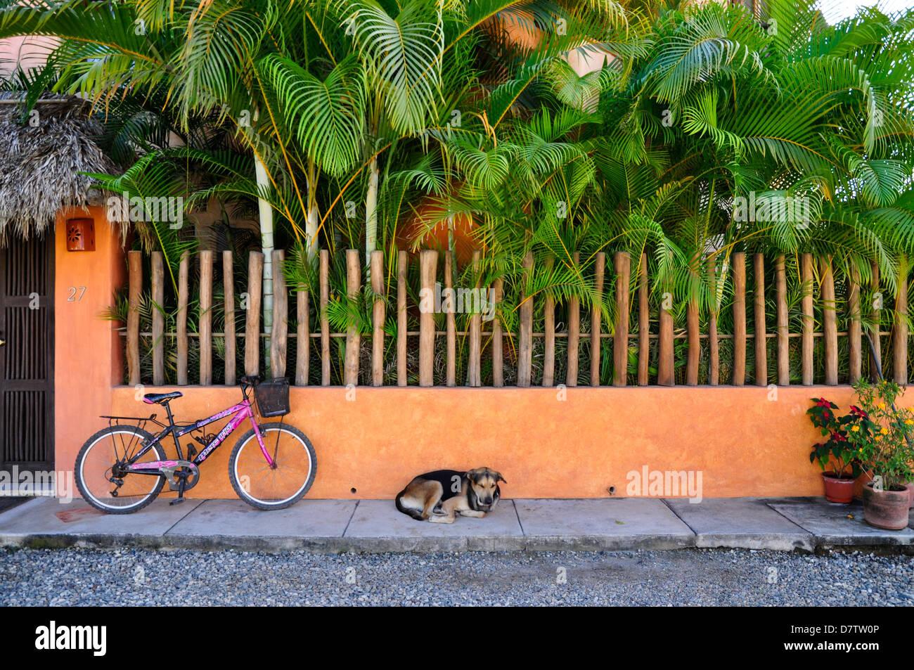 Dog sleeping on sidewalk in San Pancho, Mexico. - Stock Image