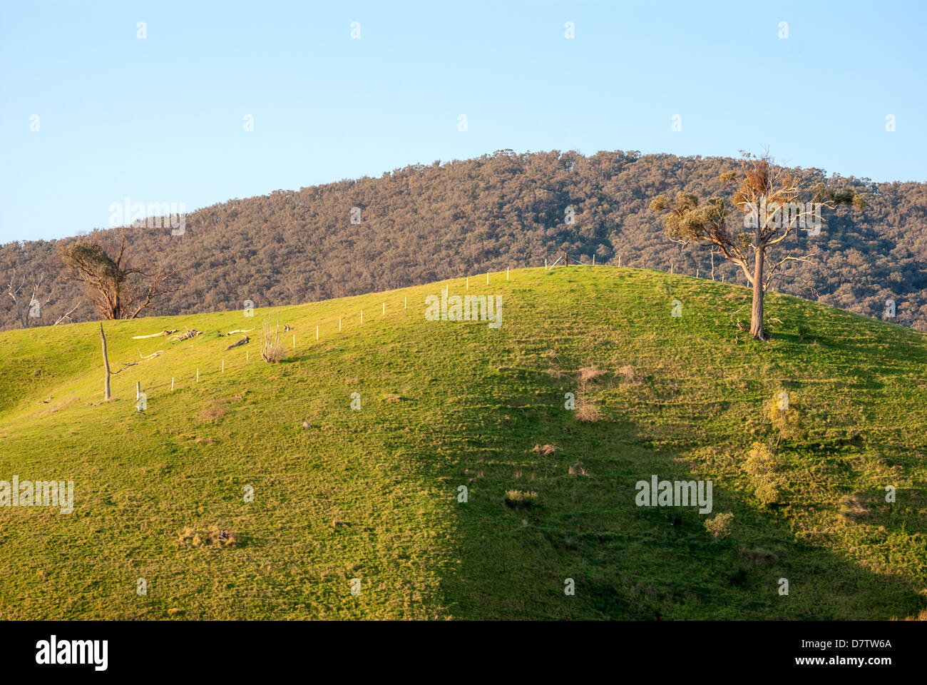 Farm land between the Victorian high country towns of Mansfield and Jamieson, in  Australia. - Stock Image