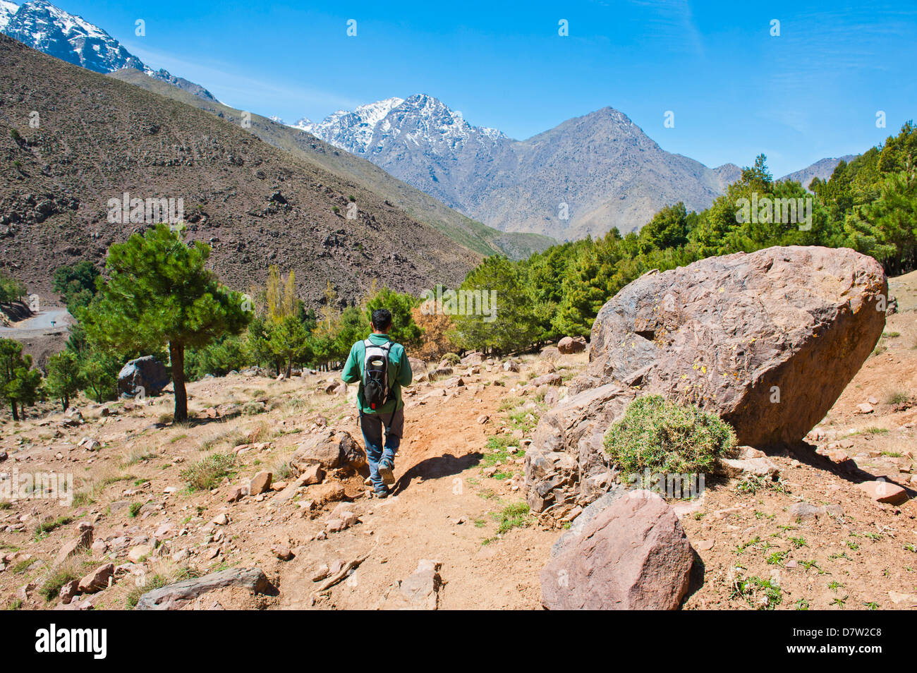 Tour guide trekking in the Imlil valley, on route from Tizi n Tamatert into Imlil, High Atlas Mountains, Morocco, - Stock Image