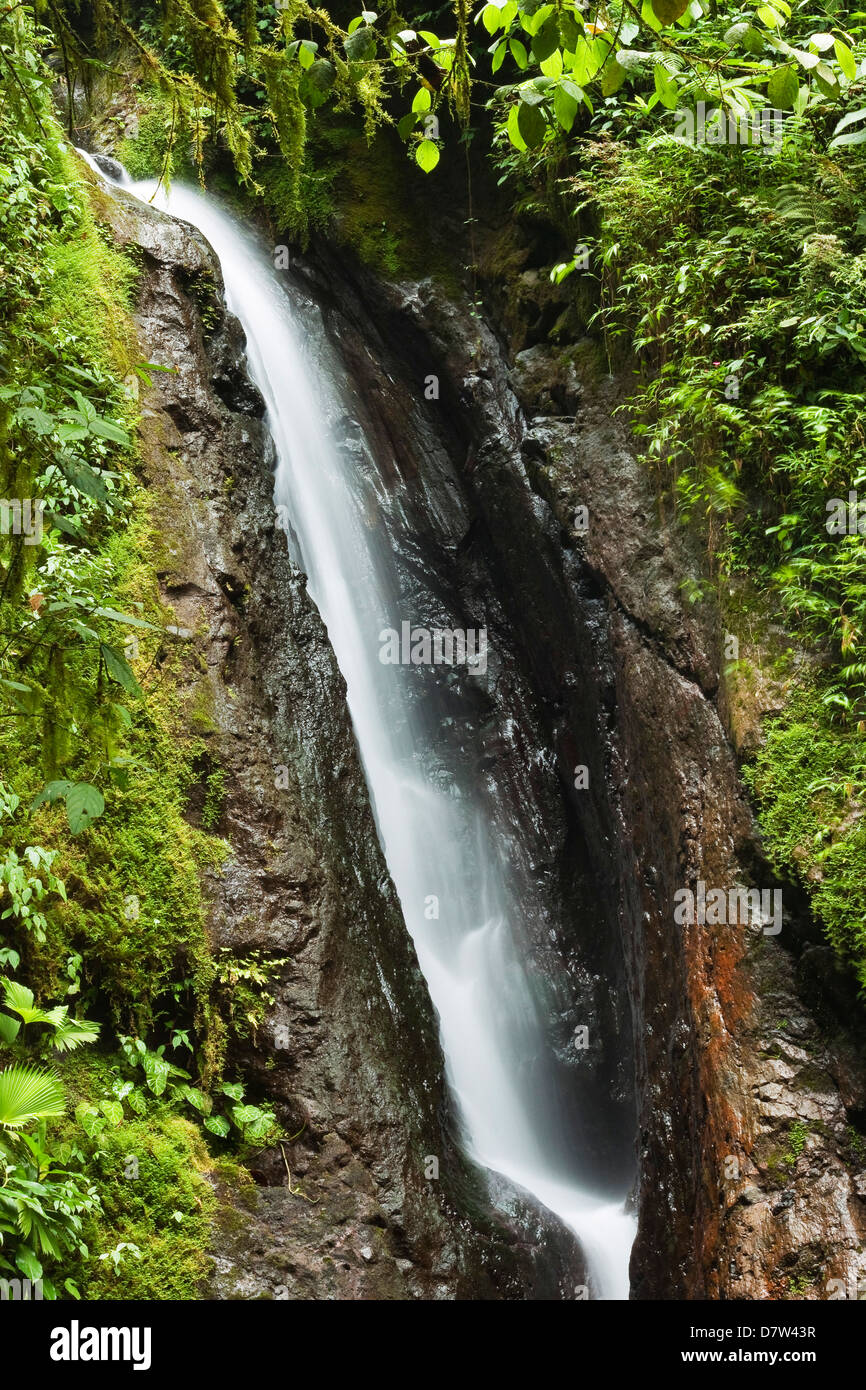 Waterfall at Arenal Hanging Bridges where the rainforest is accessible via walkways, La Fortuna, Alajuela Province, - Stock Image