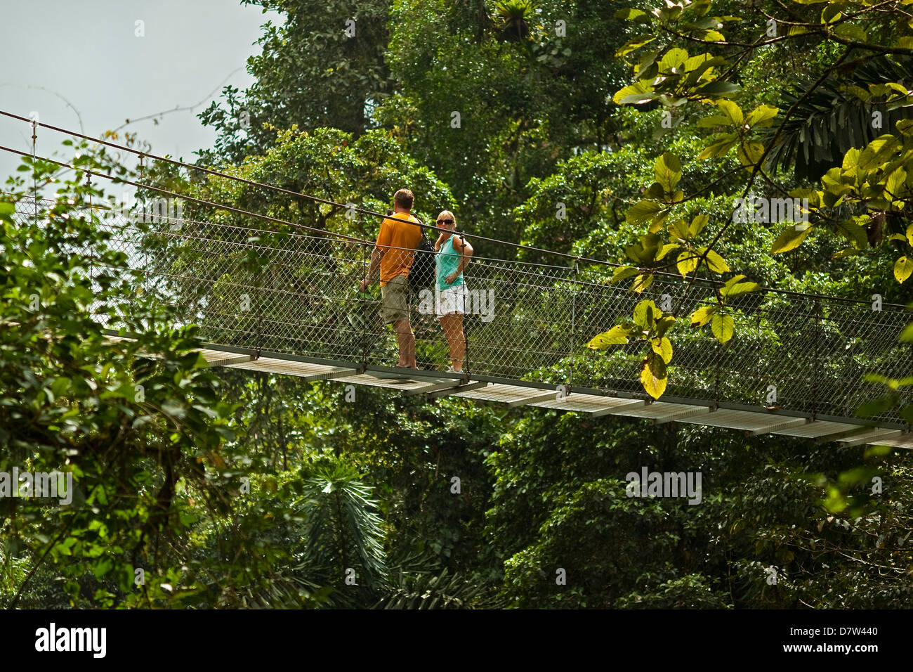 Tourists on walkway in the rainforest canopy at Arenal Hanging Bridges, La Fortuna, Alajuela Province, Costa Rica - Stock Image