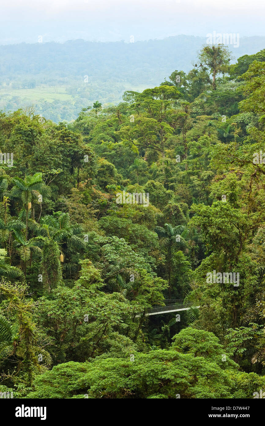 Jungle at Arenal Hanging Bridges where rainforest canopy is accessible via walkways, La Fortuna, Alajuela Province, - Stock Image