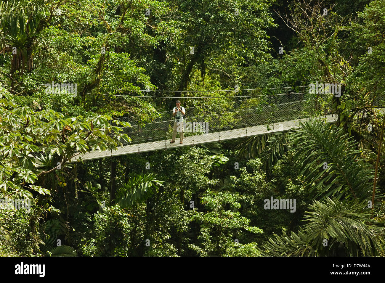 Visitor at Arenal Hanging Bridges where rainforest canopy is accessed via walkways, La Fortuna, Alajuela Province, - Stock Image