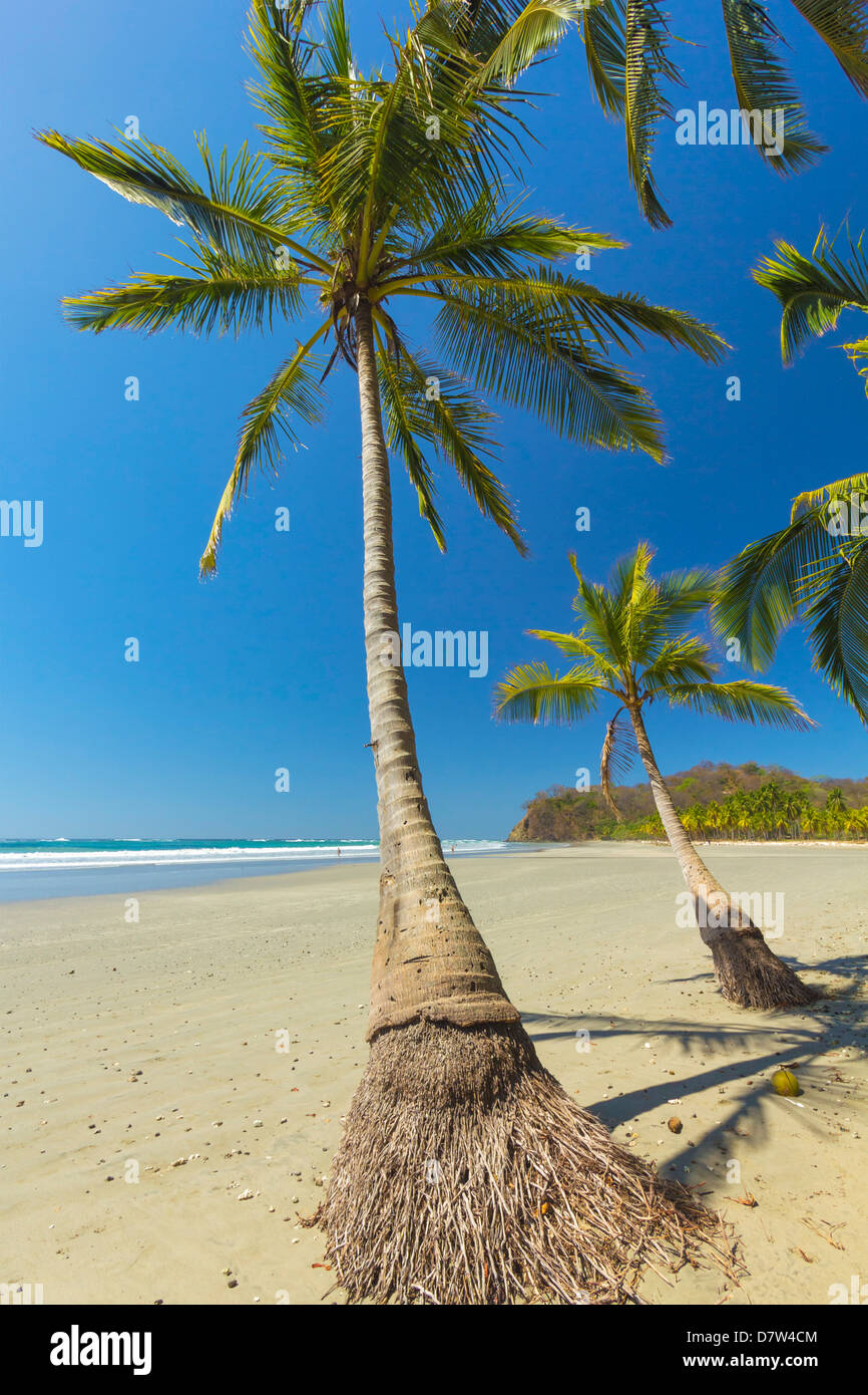 The white sand palm-fringed beach at this laid-back village & resort; Samara, Guanacaste Province, Nicoya Peninsula, - Stock Image