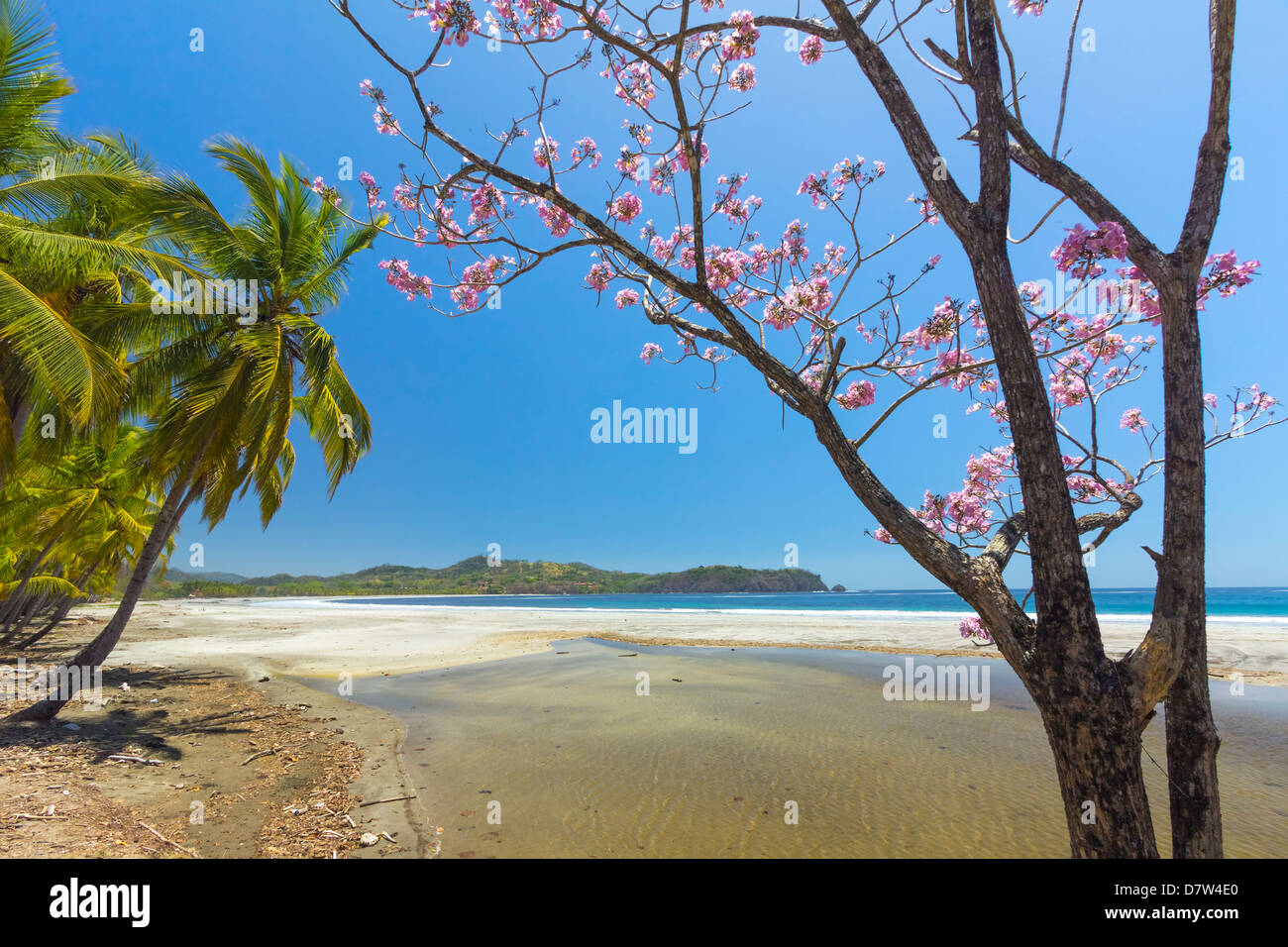 Beautiful palm fringed white sand Playa Carrillo, Carrillo, near Samara, Guanacaste Province, Nicoya Peninsula, - Stock Image