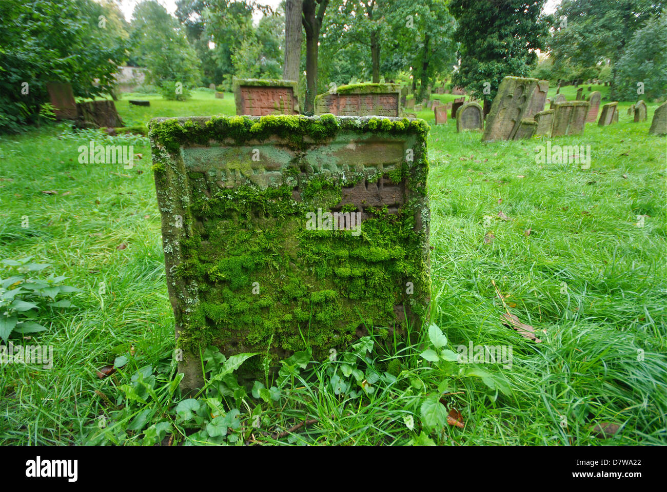 Mossy Hebrew writing on a grave in an old overgrown Jewish cemetery - Stock Image