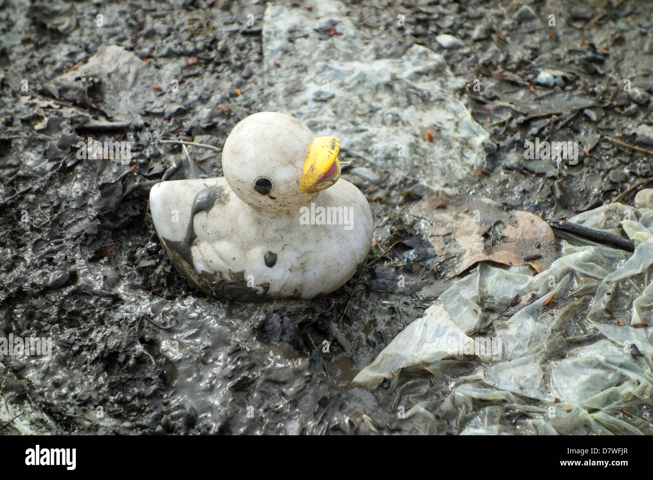 An old and faded plastic / rubber duck toy in a muddy puddle - Stock Image