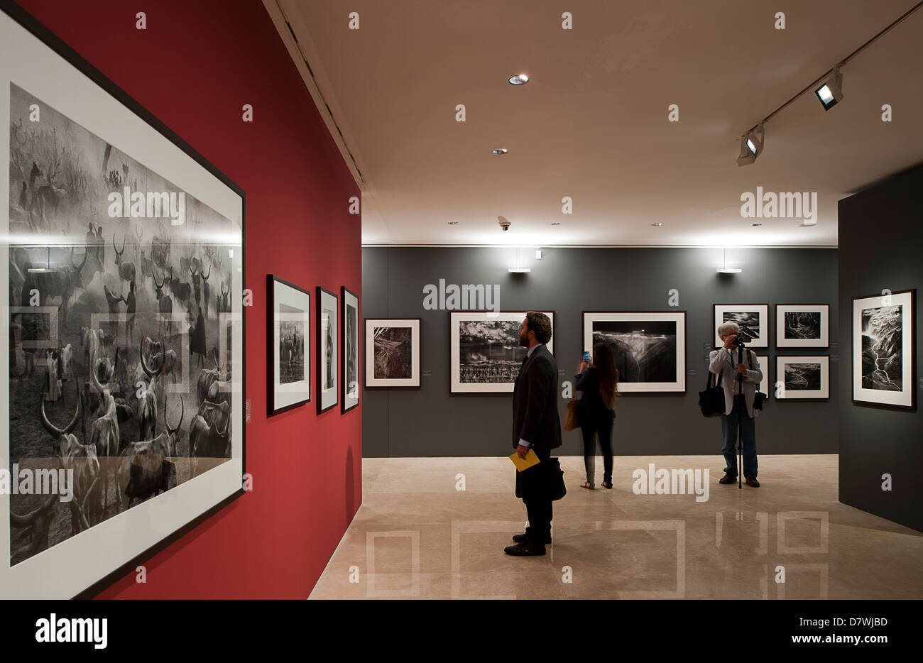 Exhibition 'Genesis' of the Brazilian Photographer Sebastiao Salgado. Ara Pacis Museum, Rome, Italy. - Stock Image