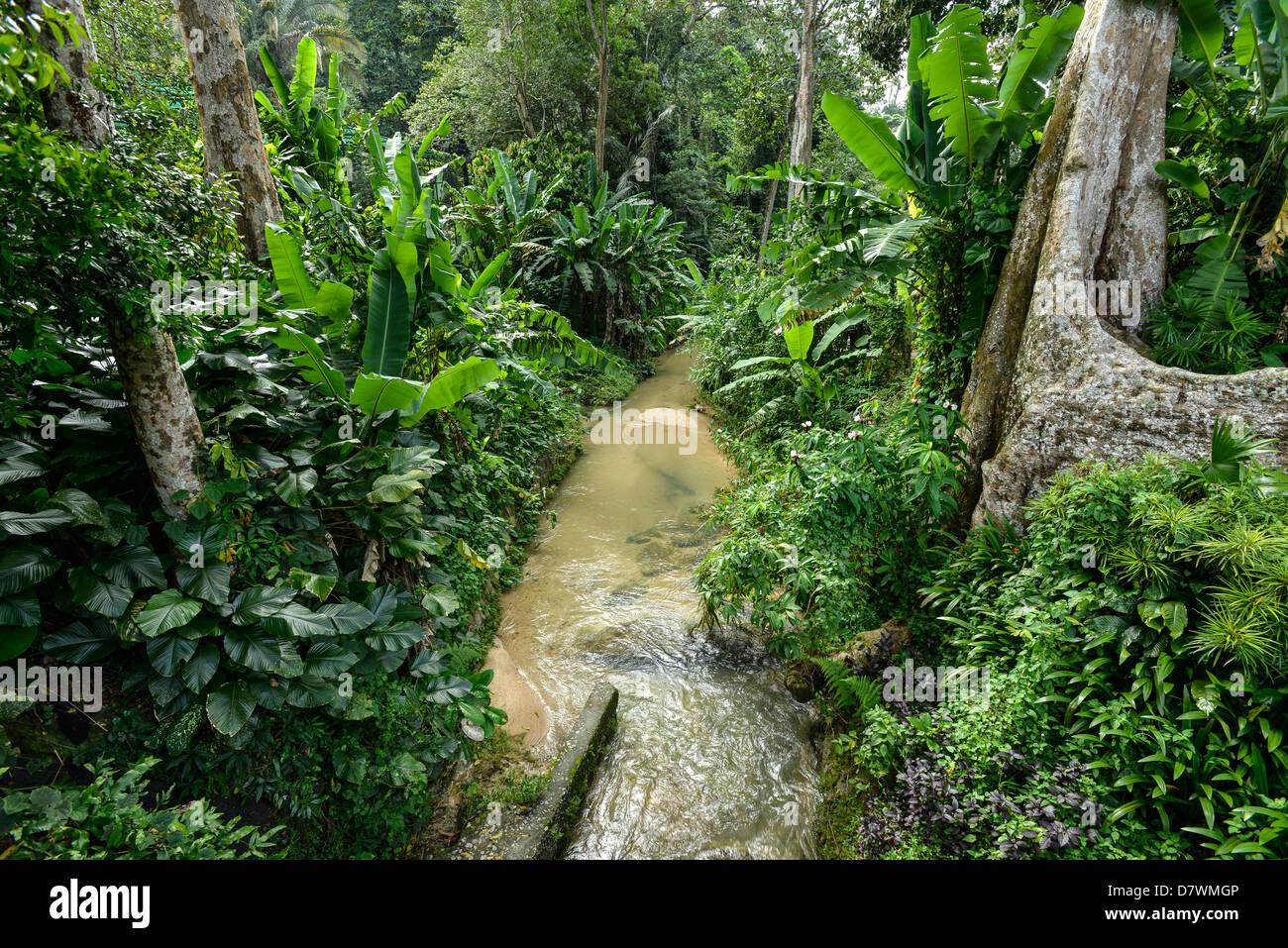Asia Malaysia Penang Botanic garden - Stock Image